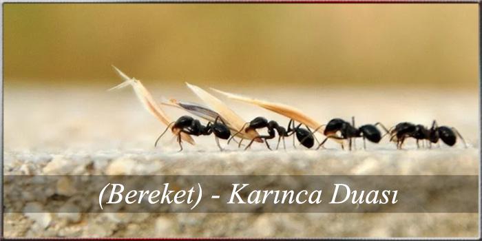 (Bereket) - Karınca Duası